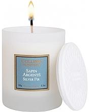 Voňavky, Parfémy, kozmetika Vonná sviečka Strieborný smrek - Collines De Provence Silver Fir Scented Candle